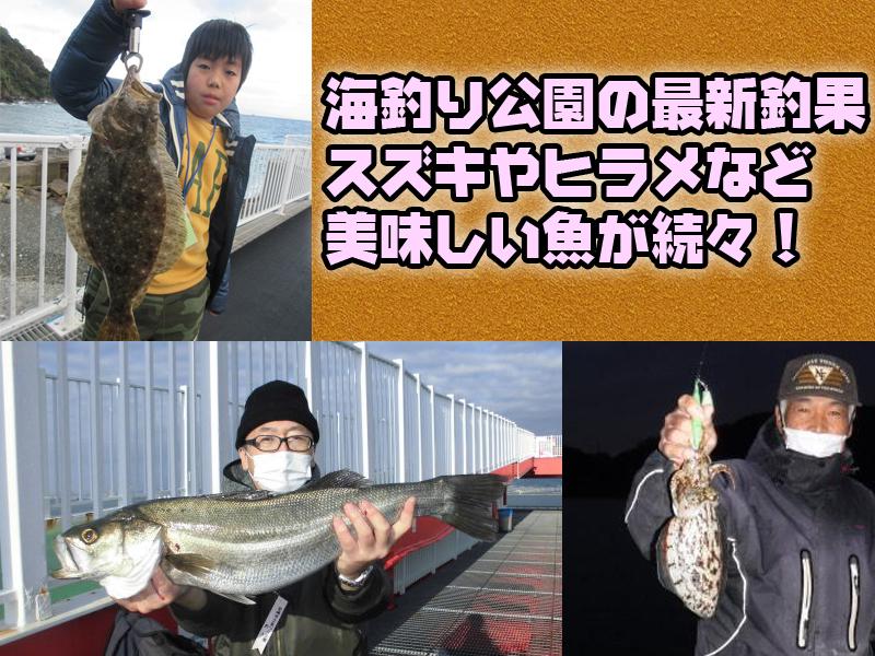釣果 公園 海 釣り