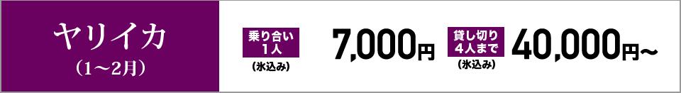 ヤリイカ(1~2月) 乗り合い1人7,000円(氷込み) 貸し切り4人まで40,000円~(氷込み)